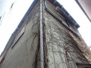 つたと壁の浮き。大きなひび割れも多々