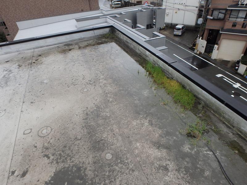 屋上水たまり