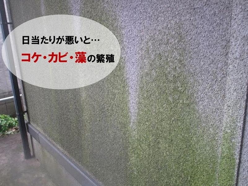 【外壁を掃除する理由】外壁のコケ・カビ・藻の繁殖
