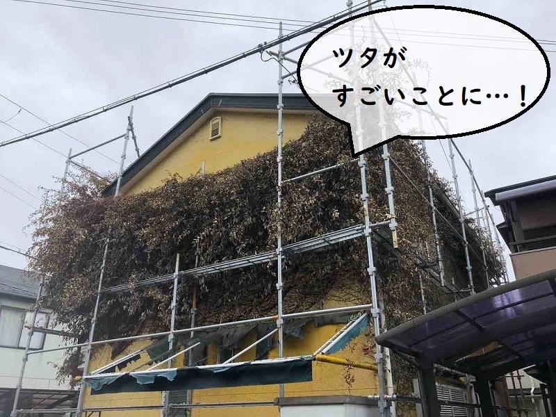 外壁リフォーム ツタ撤去前の様子