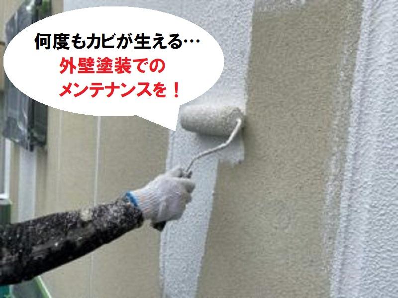繰り返す外壁のカビには外壁塗装でのメンテナンスを
