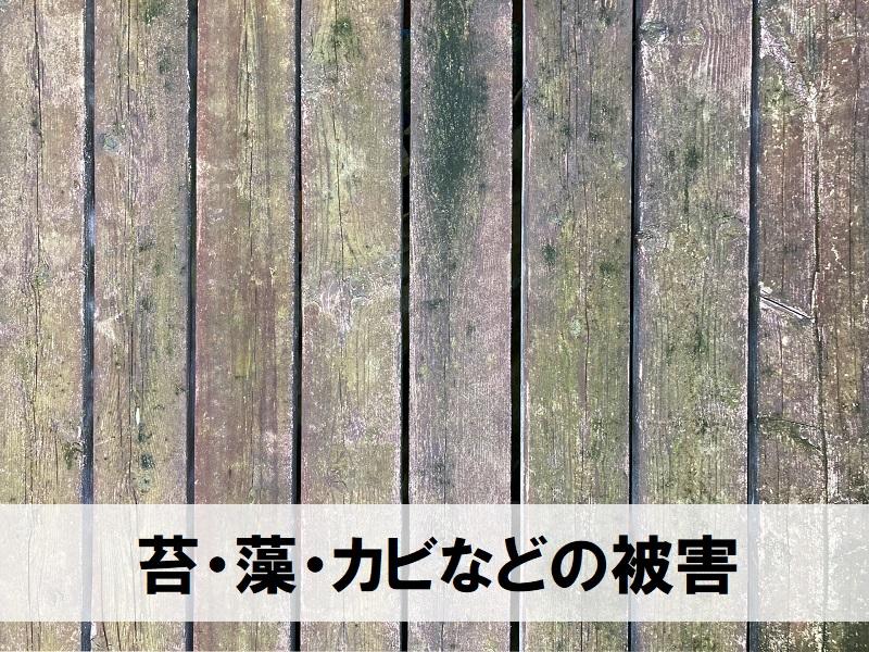 ウッドデッキの塗装のタイミング 苔・かび・藻の発生